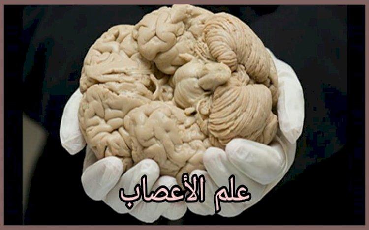 ما هو علم الأعصاب