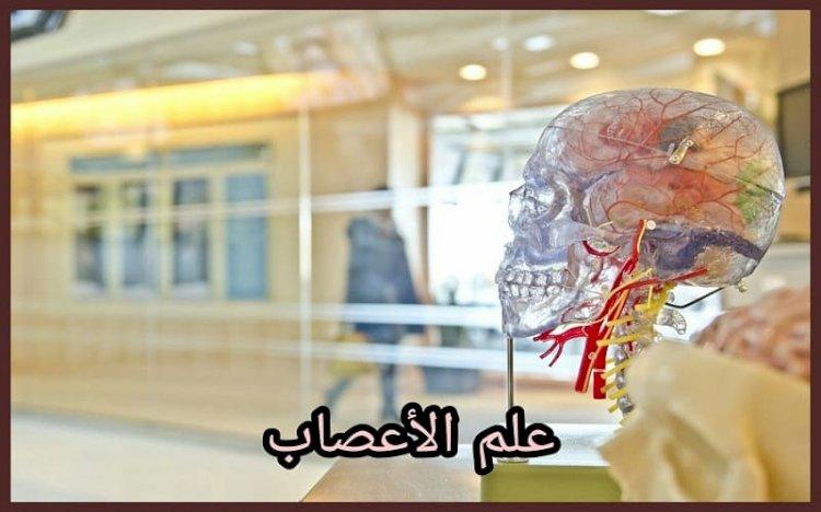 علم الأعصاب: التعريف والتاريخ والفروع